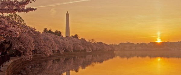 Washington-Monument-Cherry-Blossoms-short